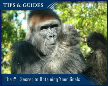 Picture of The #1 Secret to Obtaining Your Goals