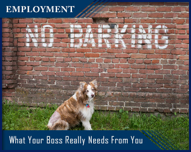 brick wall that says no barking with dog in front - title employment - What Your Boss Really Needs From You